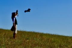 Il falco spicca il volo