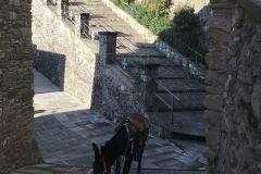 Pinocchio a spasso per il borgo di Lierna 2